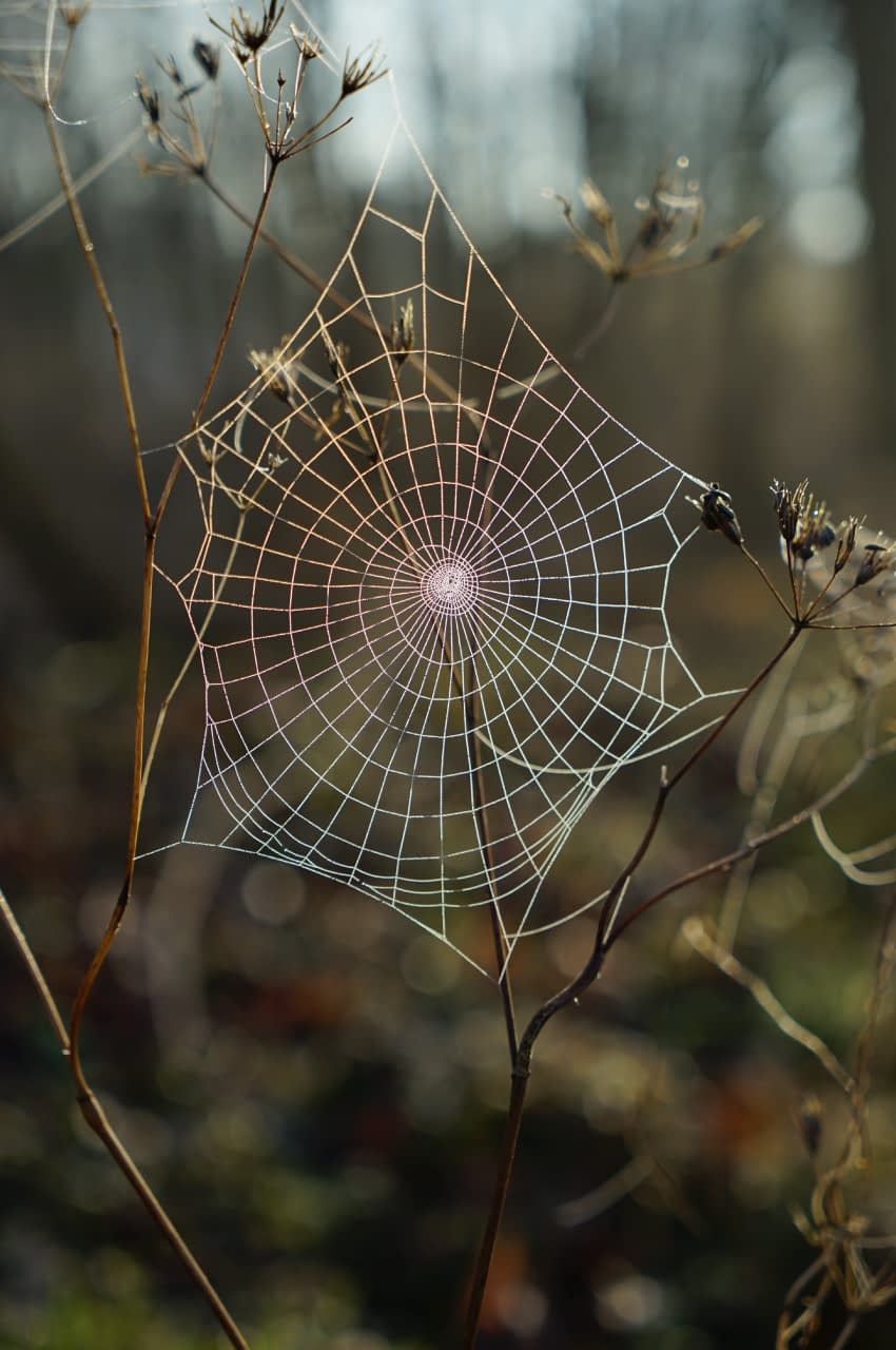 biomimicry in business